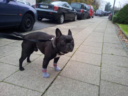 hunde pfotenschutz socken