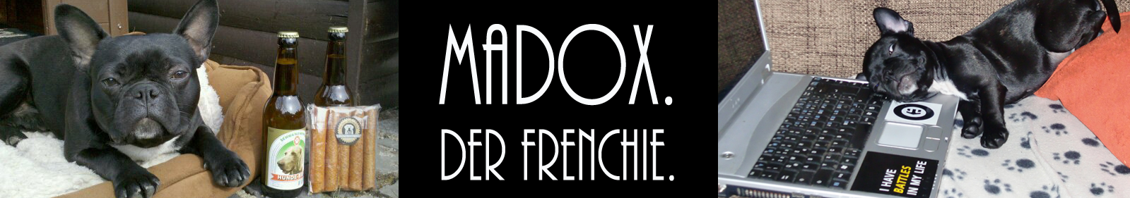 Madox. Der Frenchie.