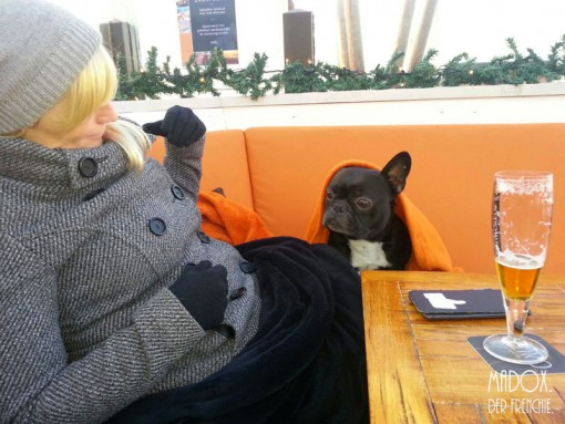 farnzösische bulldogge holland
