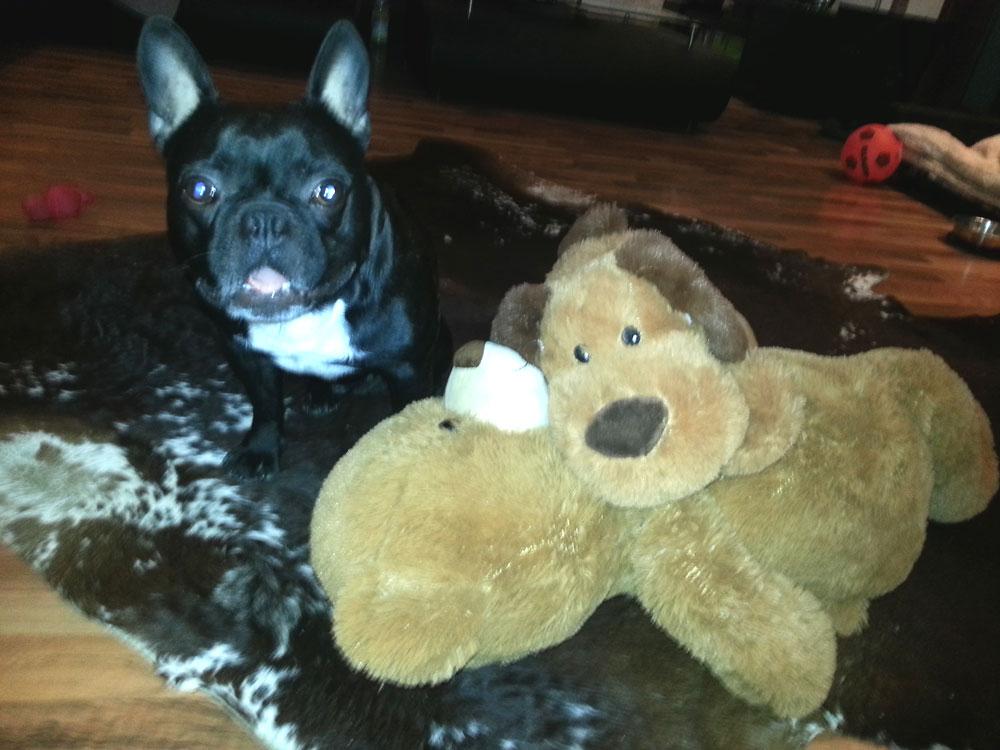 sex-puppe-madox-bulldogge