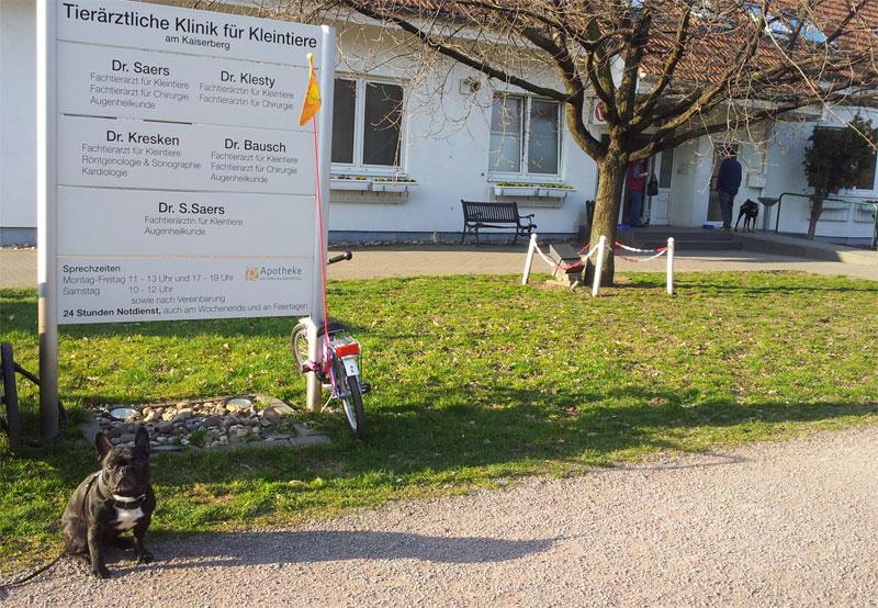 Besuch In Der Tierklinik Duisburg Madox Und Das Gaumensegel