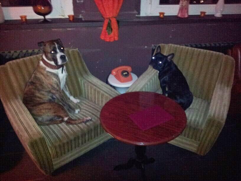 Gini und Madox frenchie