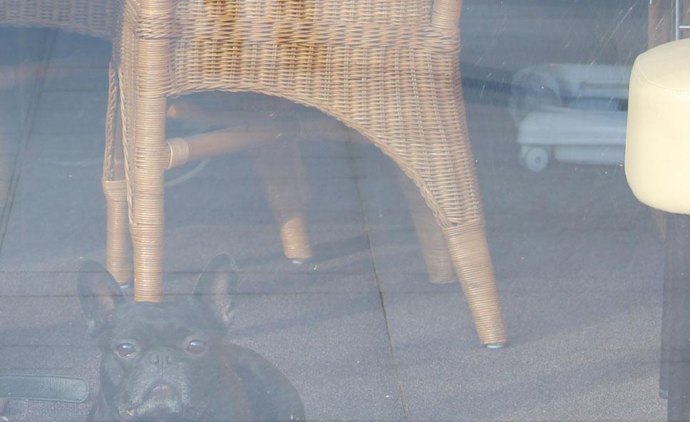 hund verstecken