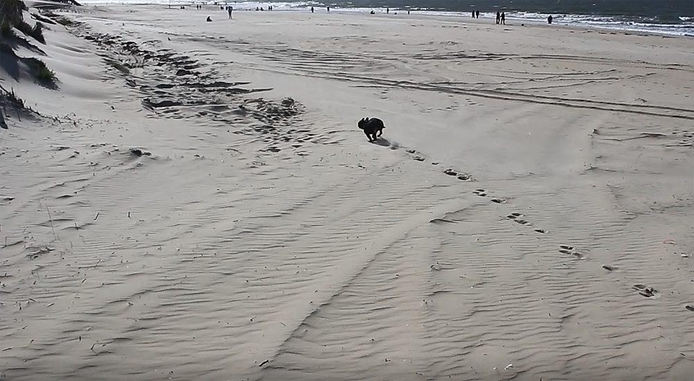 hund strand rennen
