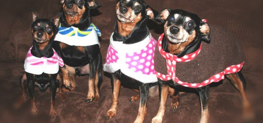 frenchie madox: pinscher gang
